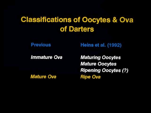 Oocyte Classifications