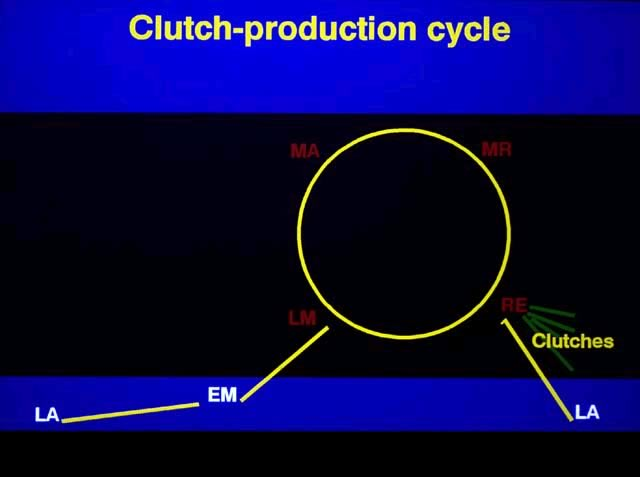 Clutch Production cycle