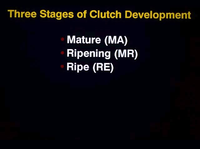 3 Stages of Clutch Development